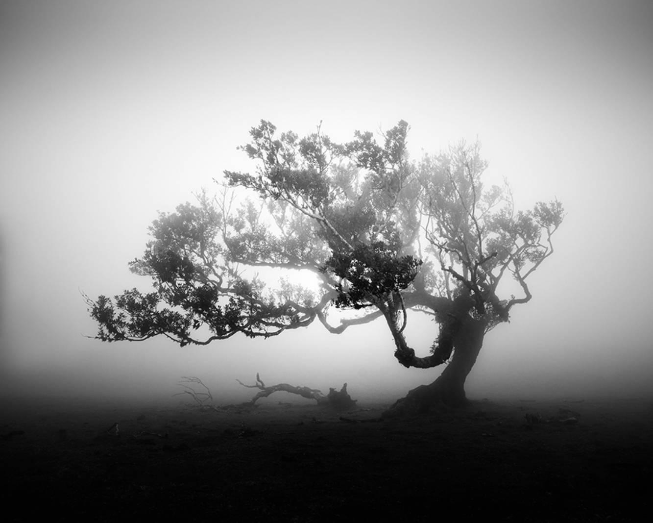 Fanal © Michael Schlegel