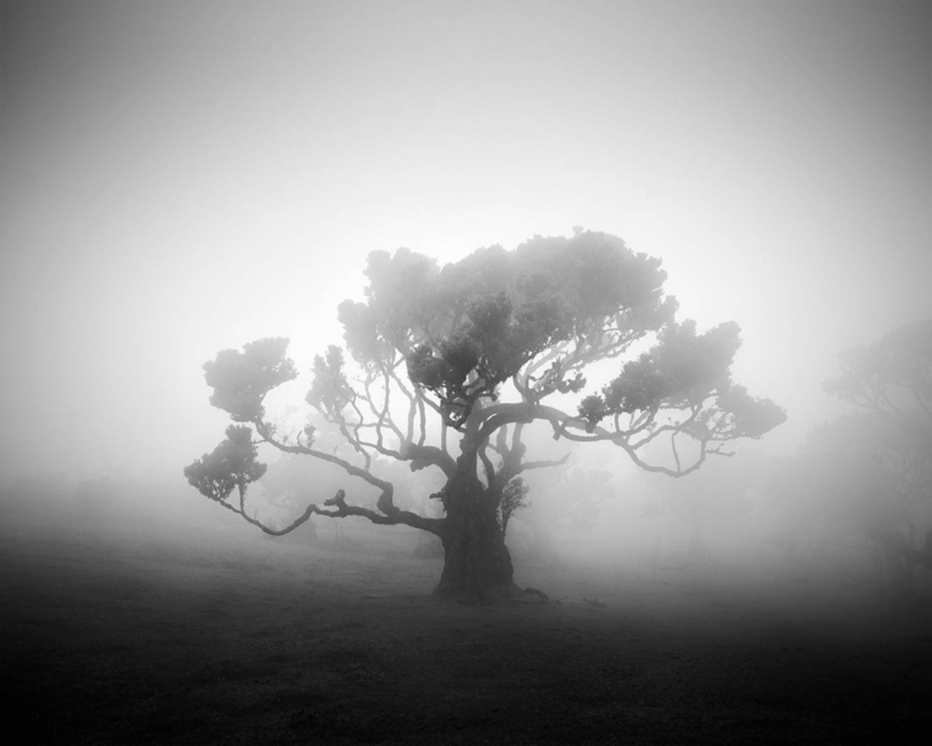 Fanal II © Michael Schlegel